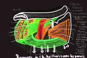 Schéma d'anatomie pour les G3.