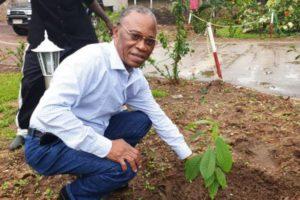 Plantation d'arbre devant la faculté